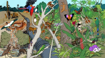 Rainforest Under Attack