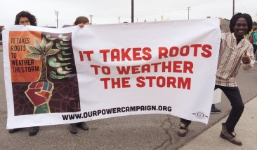 It Takes Roots to Weather the Storm