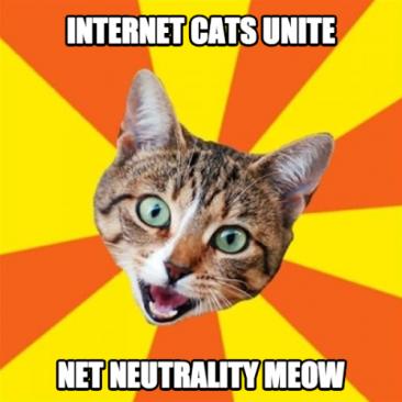 Internet Cats Unite