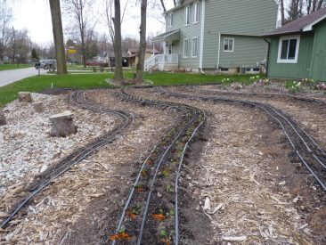 Urban Garden early in Season!