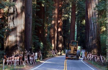 Save Richardson Grove
