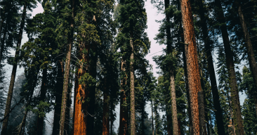 Don't Let Trump Axe Giant Sequoia National Monument!